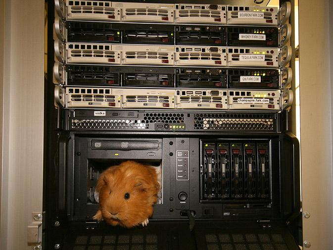 guinea pig in fark server